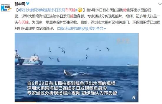 冲上热搜12头领航鲸搁浅或与这些原因有关…